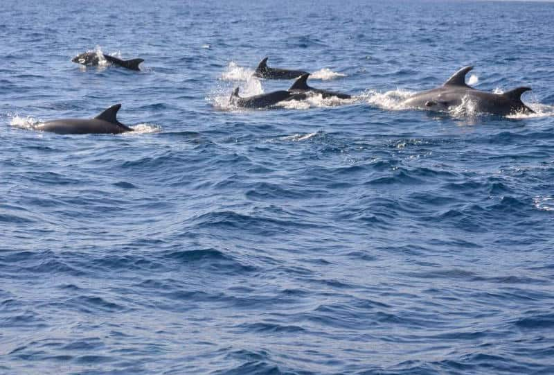 See dolphins in Morro Jable