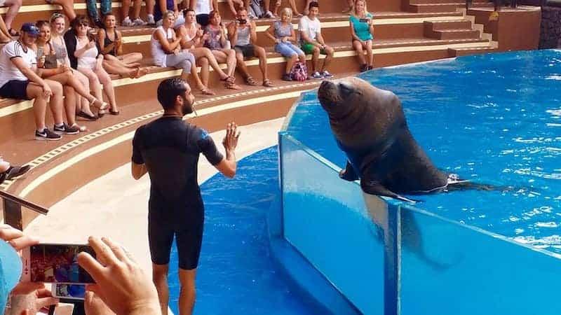 Show de los leones marinos