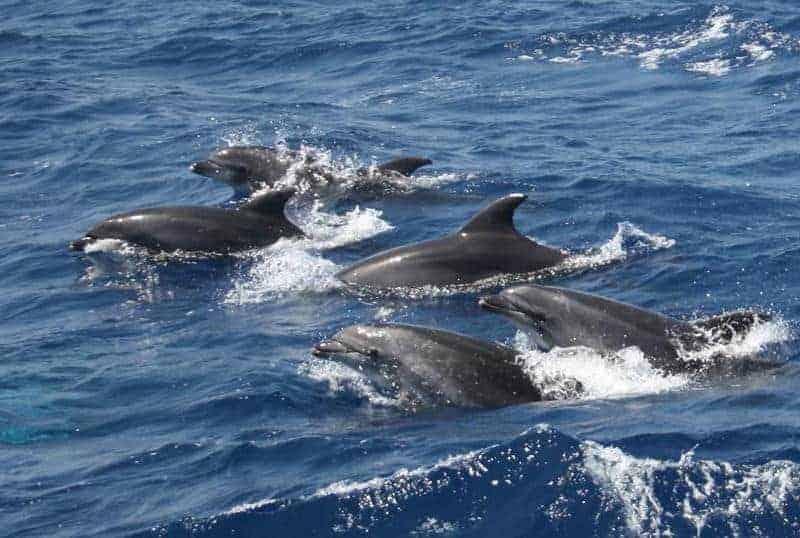 Barco para ver delfines desde Morrojable