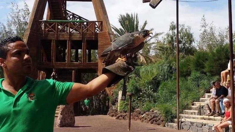 Raptor bird show