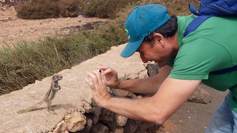 Fuerteventura Eichhörnchen posiert