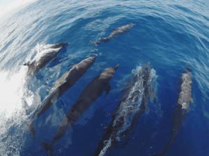 Ver delfines en Caleta de Fuste